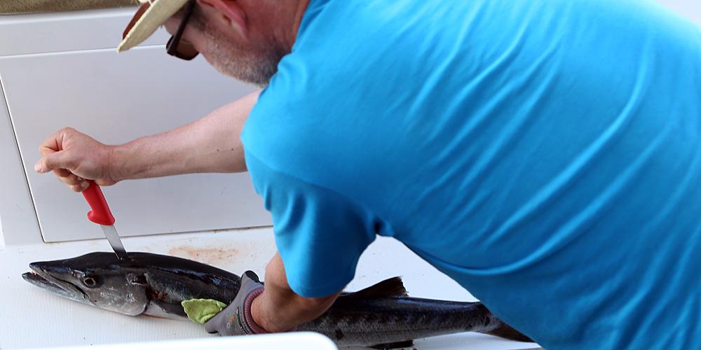 Ciguatera Die Unsichtbare Gefahr Beim Angeln Fischvergiftung
